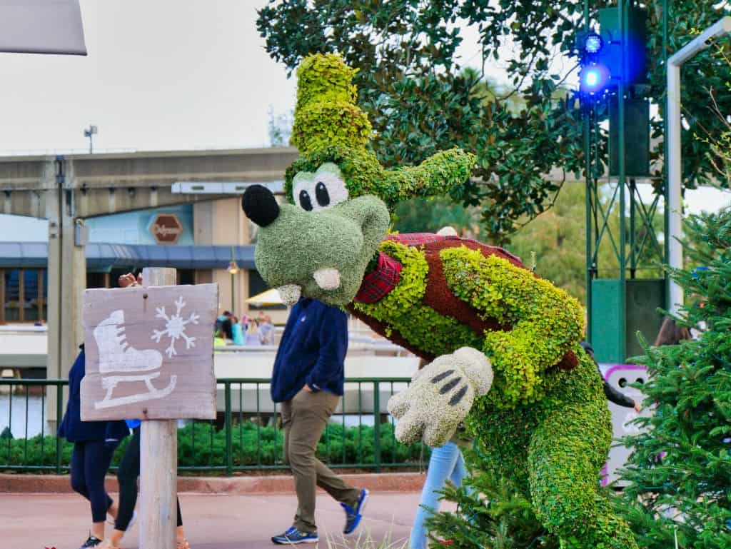 Goofy made from a bush with a scarf on at Epcot at Christmas