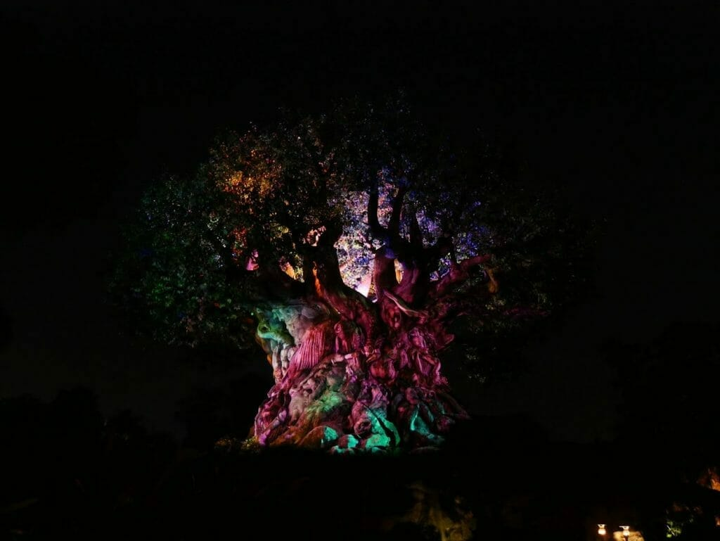 Tree of Life with projections at night