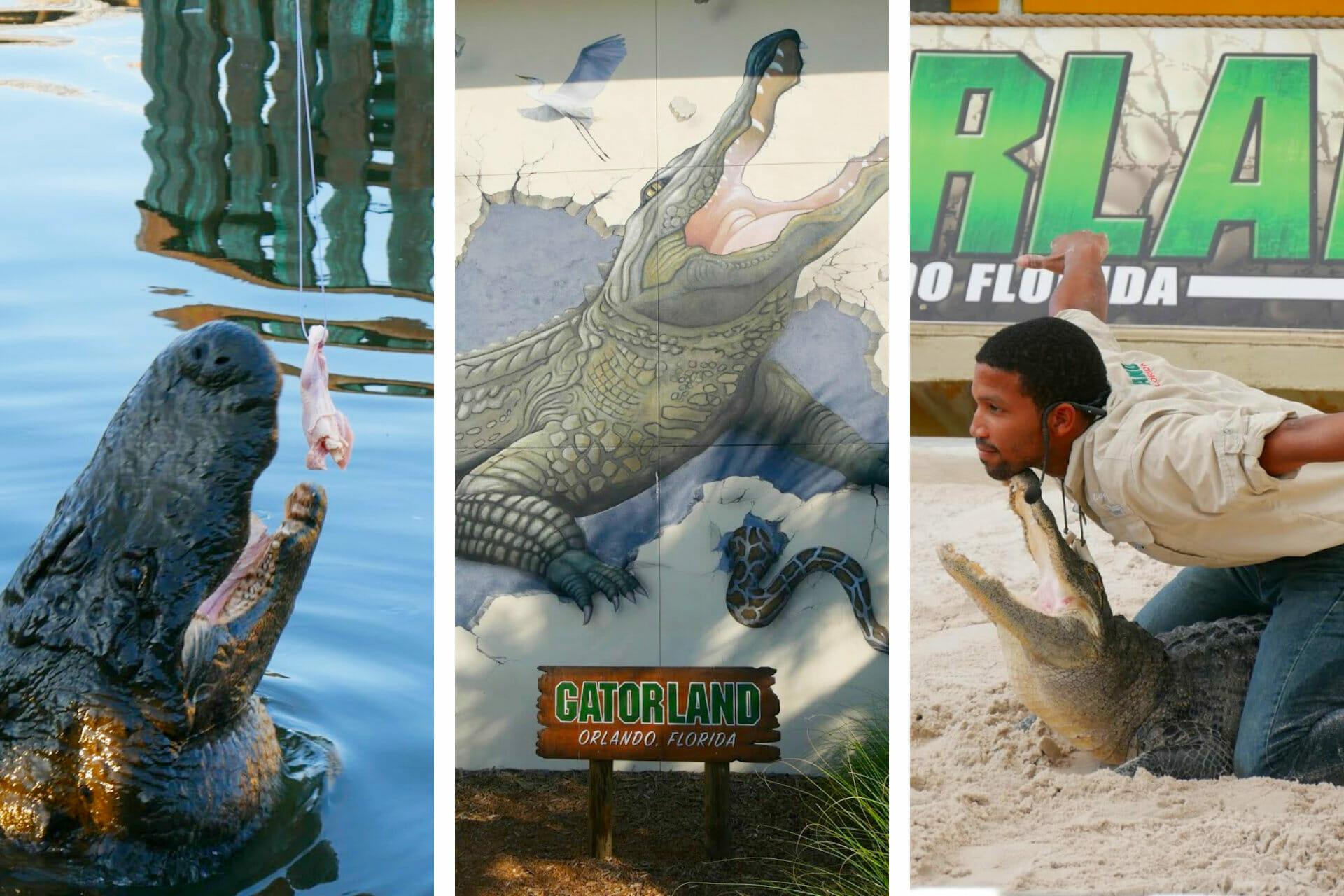 Super Honest Gatorland Florida Review via @allamericanatlas