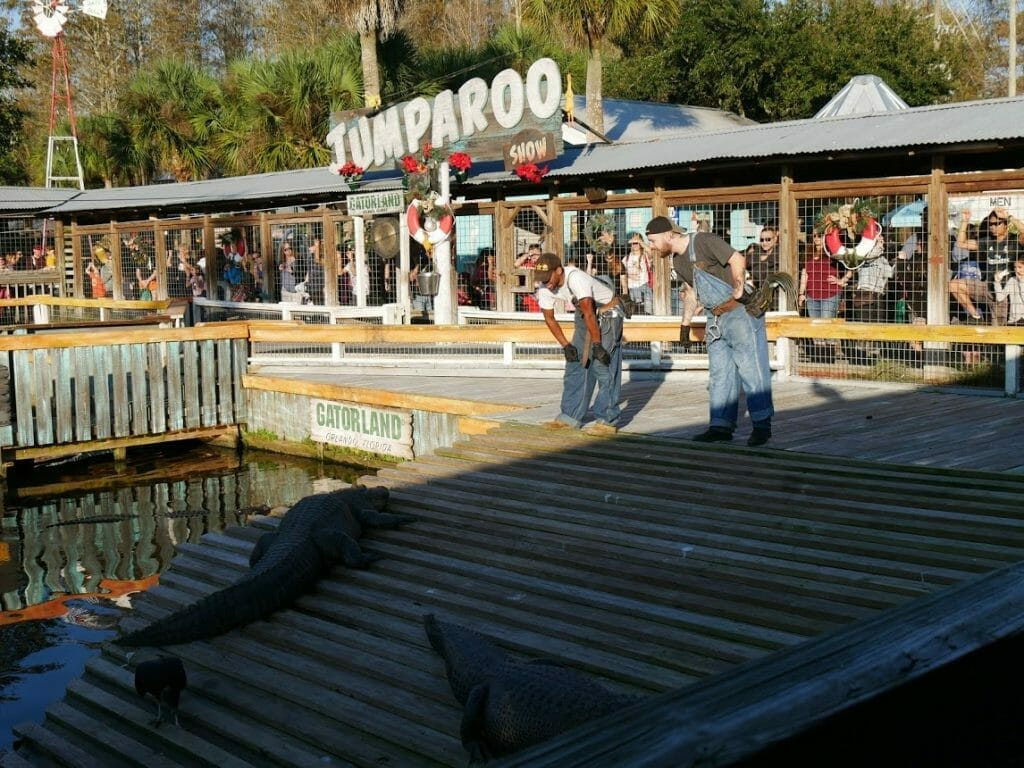 Two staff members talking to an alligator during the alligator show at Gatorland Florida