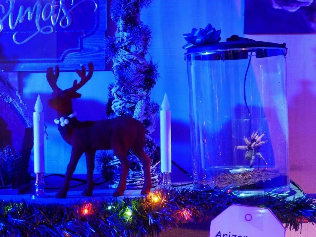 Christmas decorations inside a Gatorland spider exhibit