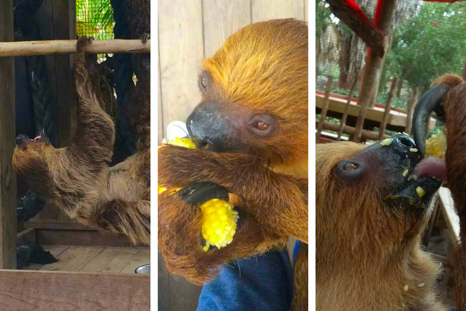 Wild Florida VIP Sloth Experience Review (+ Adorable Pics!) via @allamericanatlas