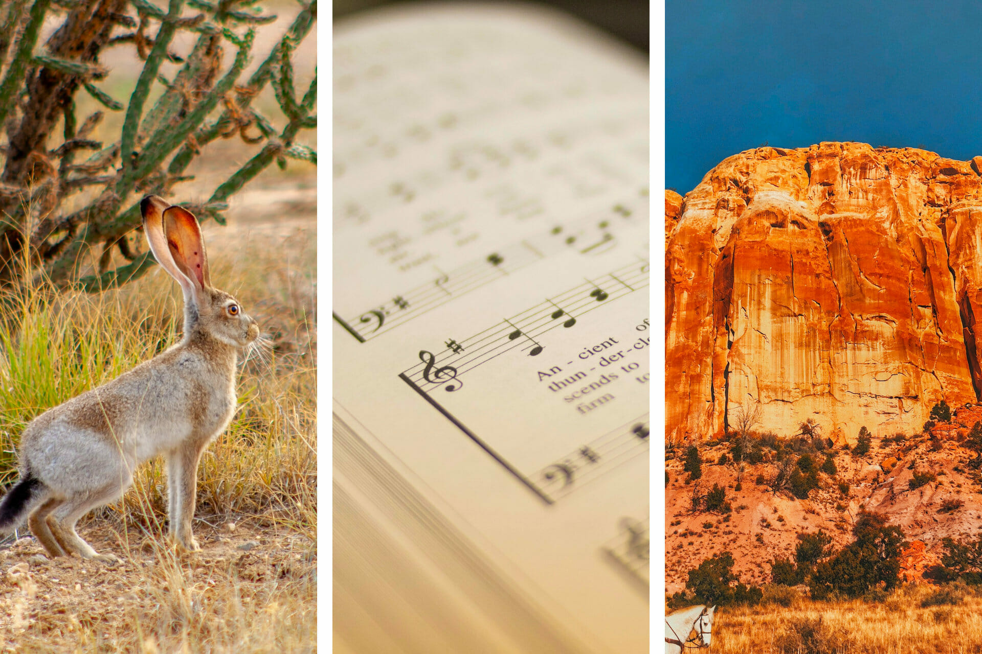 20+ Songs about New Mexico to Make You Feel at Home via @allamericanatlas