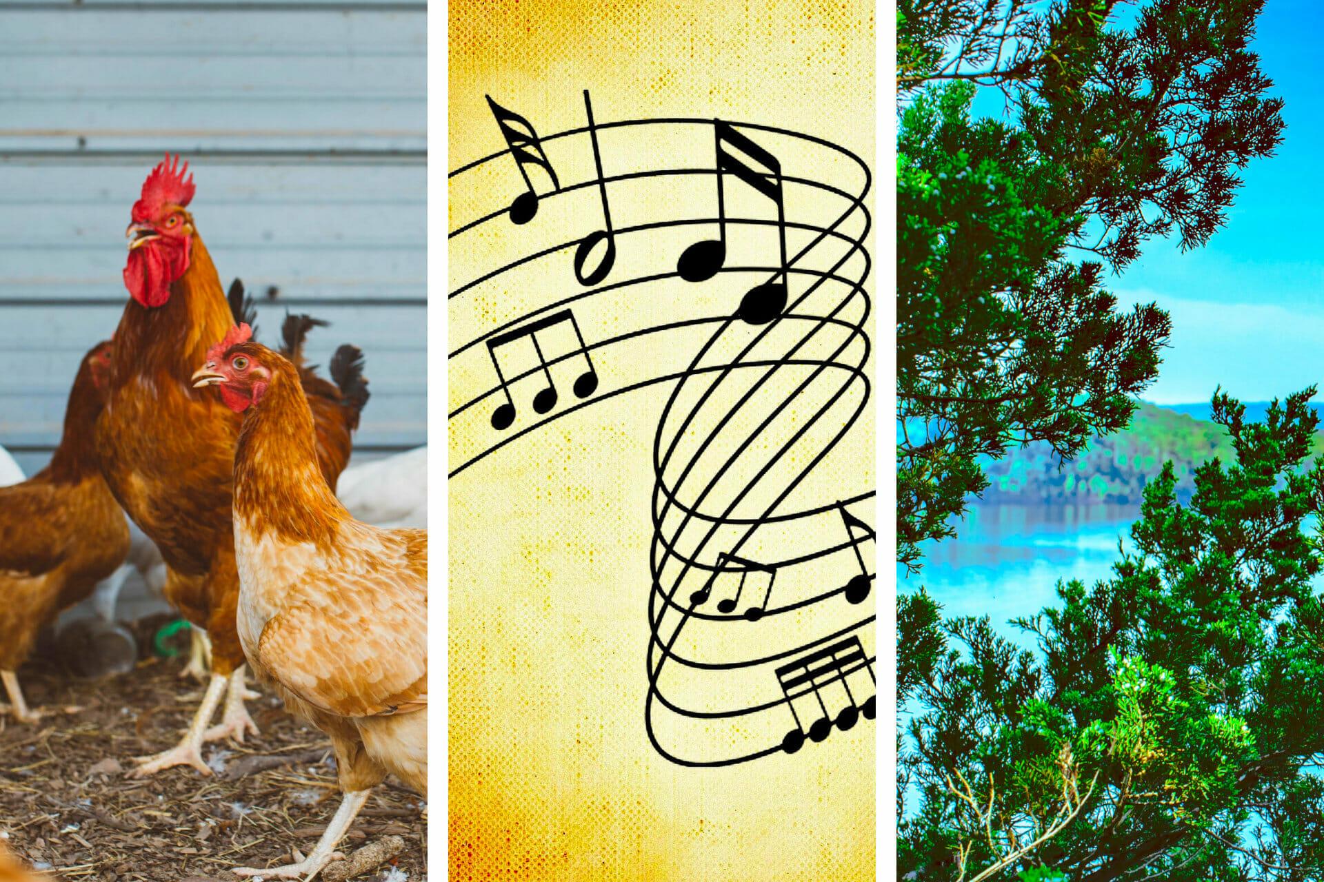 31+ Songs about Arkansas To Lift Your Spirits via @allamericanatlas
