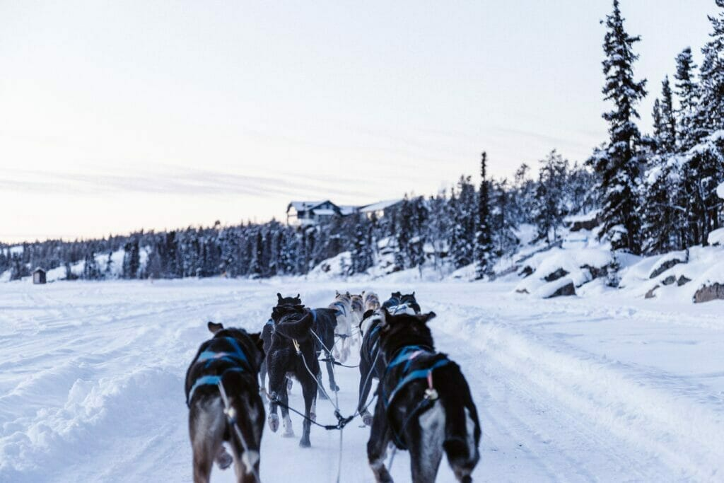dog racing in alaska