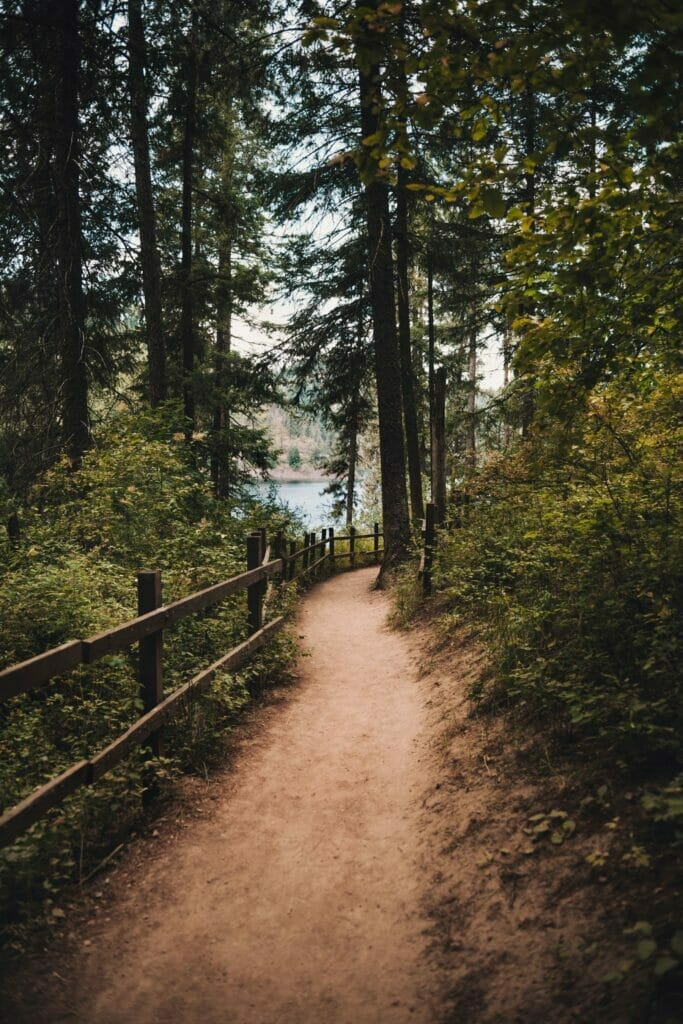 path with trees on the lewis and clark trail