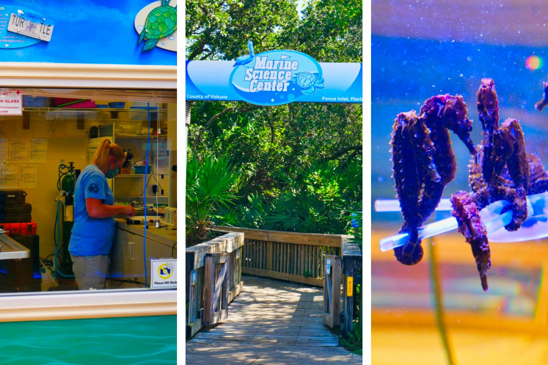 Marine Science Center in Ponce Inlet: Helpful Tips for Visitors via @allamericanatlas